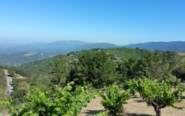 A photo from high on Montebello Road in Cupertino, with part of Ridge Vineyards in the foreground and looking toward the hills in Los Gatos in the distance