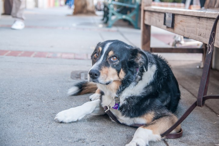 Dog in Los Gatos Small - Slideshow of Silicon Valley neighborhoods