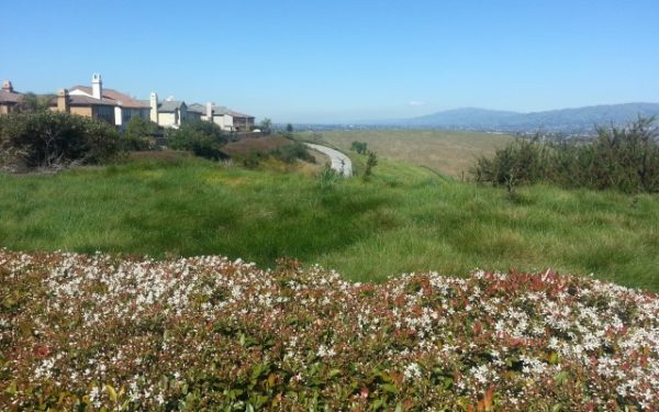 Photo from a bluff in the Evergreen area of San Jose, overlooking some younger houses and looking across to the coastal range and the Blossom Valley area of San Jose in the distance