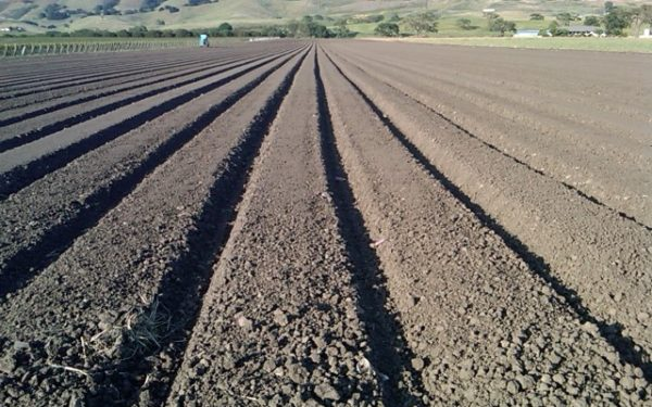 Photo of a Gilroy farm field before it was planted