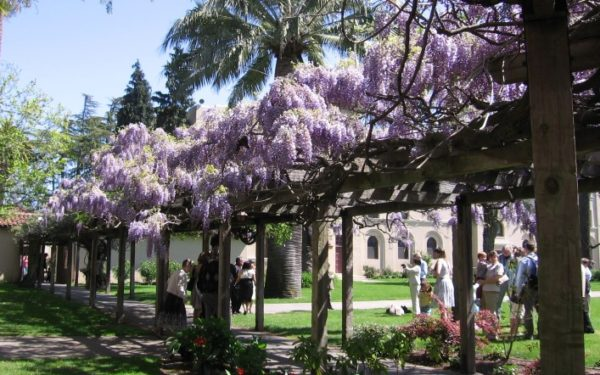 Santa Clara - Lilacs at the Mission