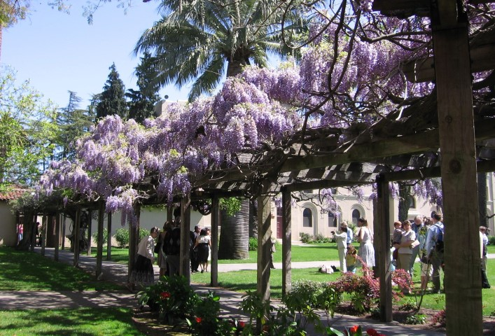 Santa Clara Lilacs at the Mission Small - Slideshow of Silicon Valley neighborhoods
