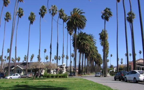 Willow Glen - Palm Haven neighborhood